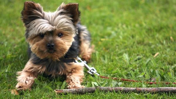 О породах домашних собак